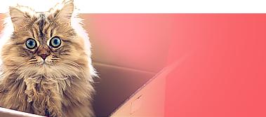 Корма для собак и кошек из европы