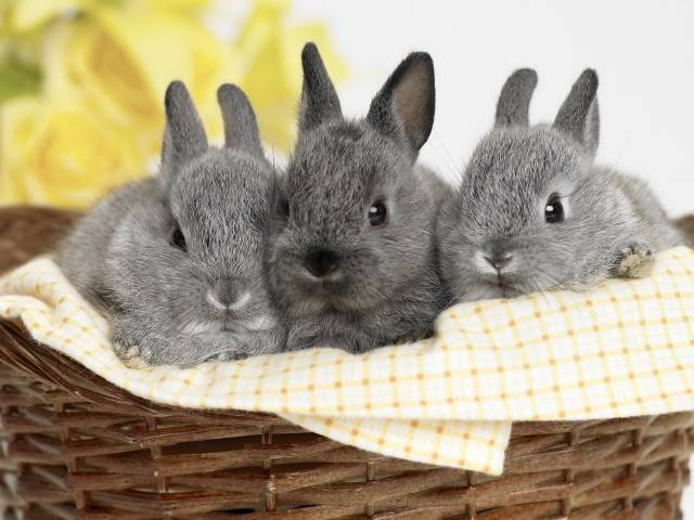bunnies_animals_rabbits.jpg